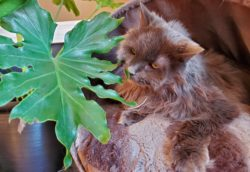 Cats and dogs and plants, oh my!